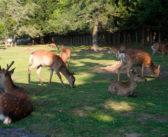 Nara: scopriamo il Giappone e i suoi cervi