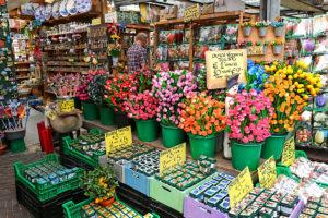 Amsterdam fiori
