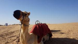 cammelli dubai