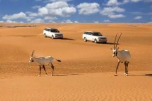 Dubai-Desert-Conservation-Drive-1
