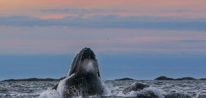 balene tromso
