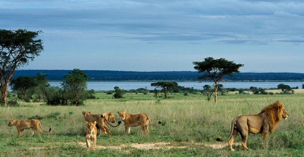 parchi nazionali Uganda