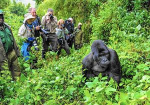 UGANDA vedere gorilla