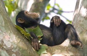 Turismo in Uganda