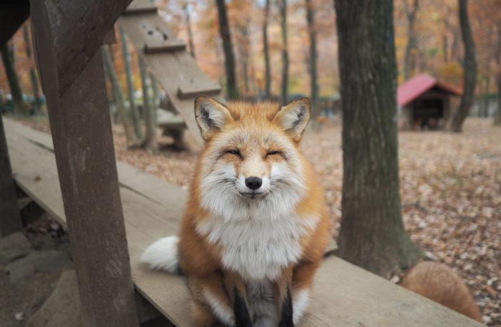 zao fox
