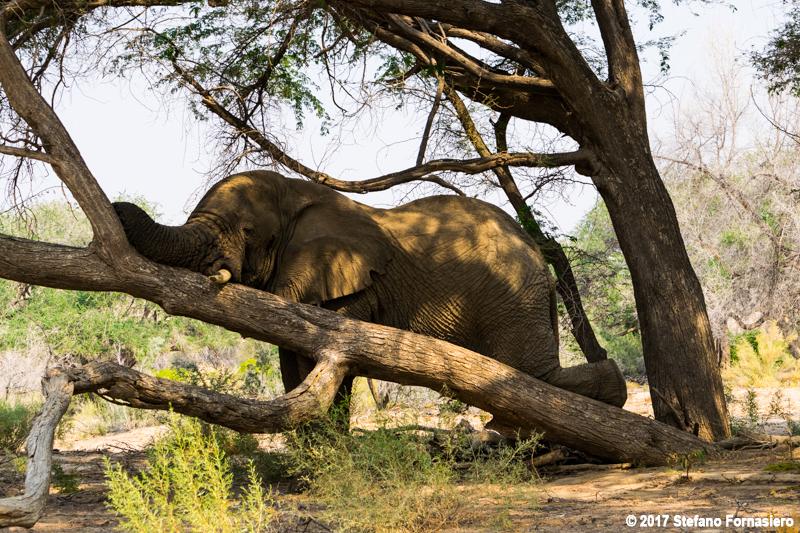 elefante safari