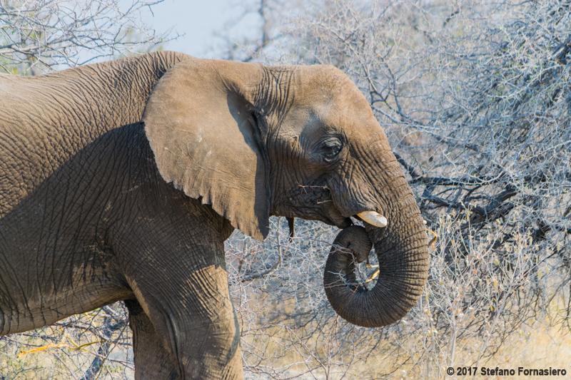 elefante namibia