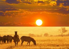 Namibia, diario di viaggio nella natura incontaminata