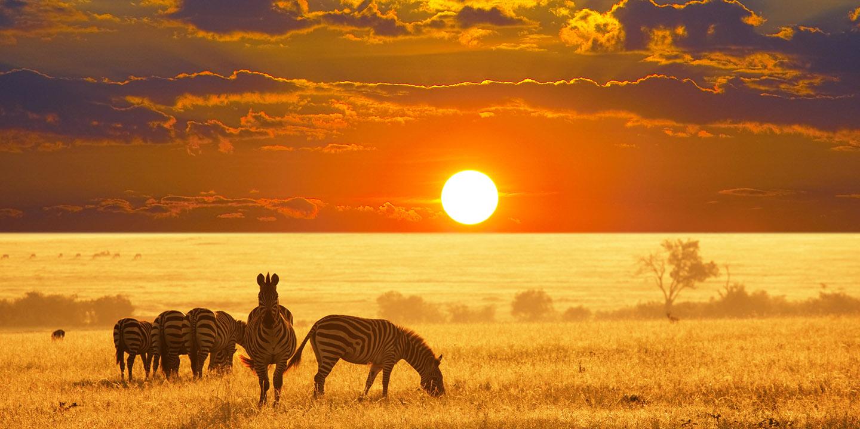 Risultati immagini per immagine namibia