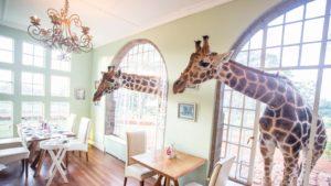 vedere giraffe africa