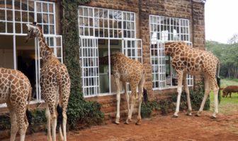 Giraffe Manor Casa hotel