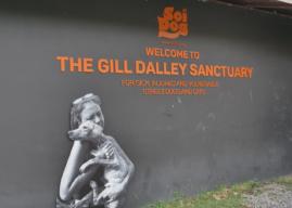 Il rifugio per animali Soi Dog Phuket – Viaggiare solidale