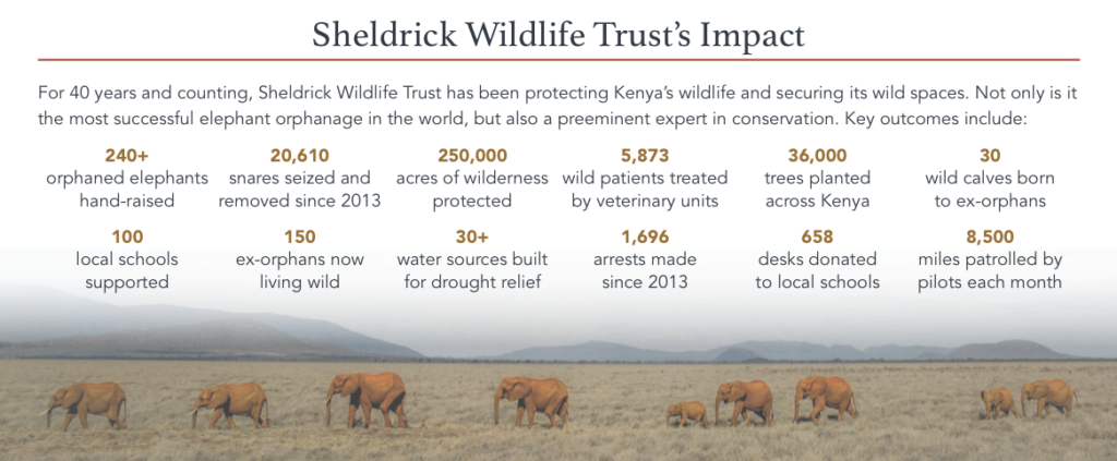 protezione elefanti kenya