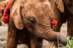 Sheldrick Wildlife Trust,