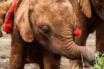 Sheldrick Wildlife Trust,