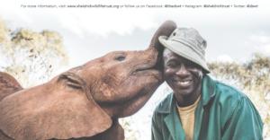 orfanotrofio elefanti nairobi