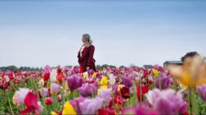 campo fiorito tulip