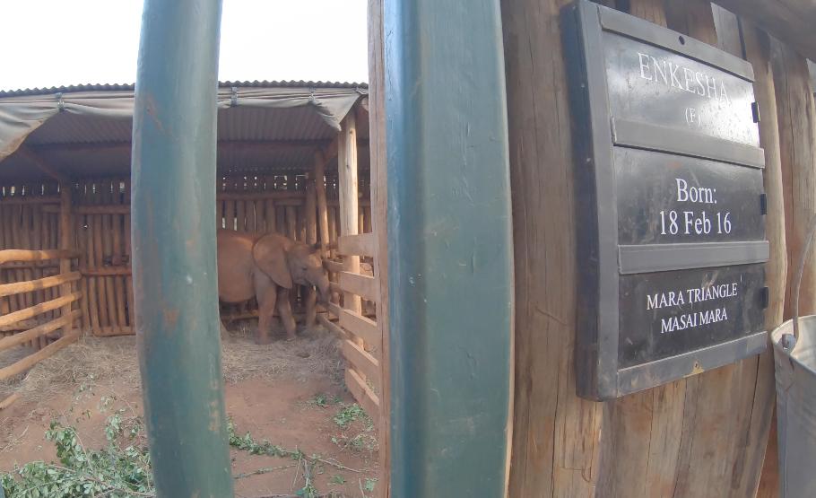 elefanti nairobi