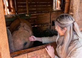Adottare un Elefante Orfano a Distanza – Viaggio in Kenya