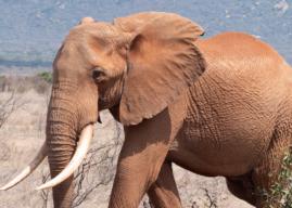 Fare un Safari in Kenya – Guida ai Parchi