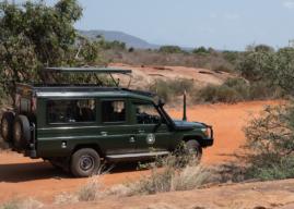 Le 10 immagini che ti faranno venire voglia di fare un Safari