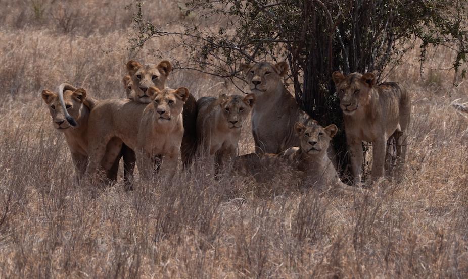 safari nairobi