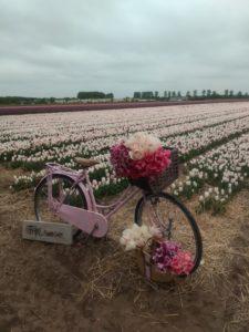 campo tulipani visitare