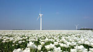 vedere tulipani olanda