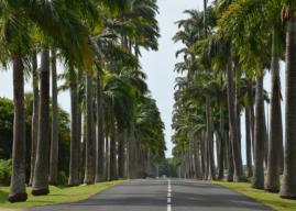 Noleggiare un'auto in Viaggio a Guadalupa